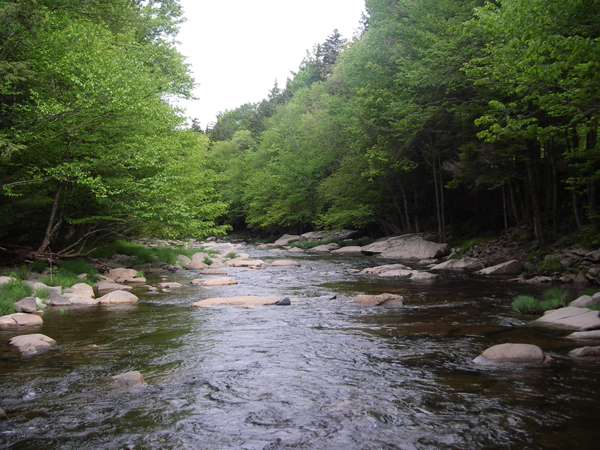 upper_schoharie_stream-shot